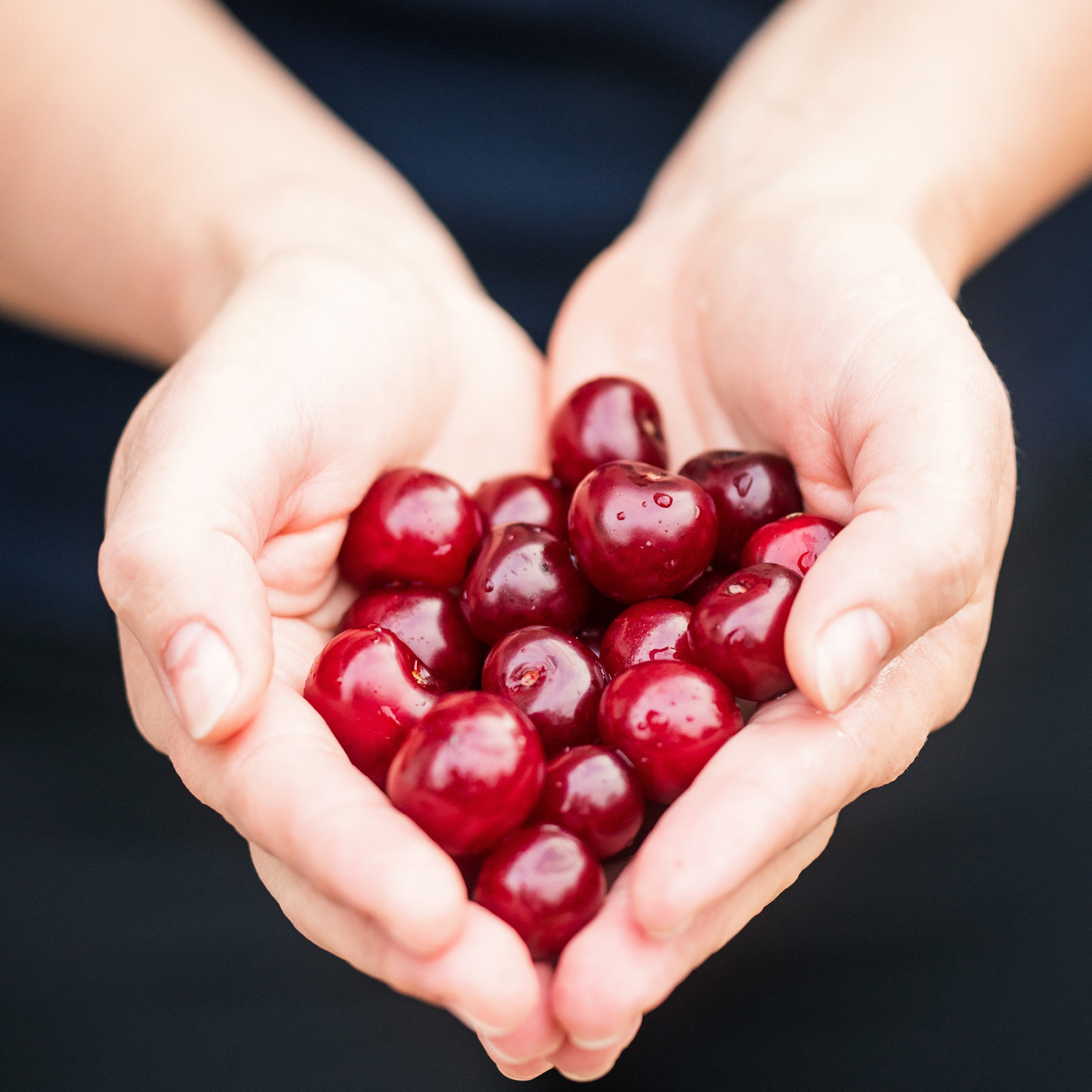 A pair of hands holding fresh cherries.